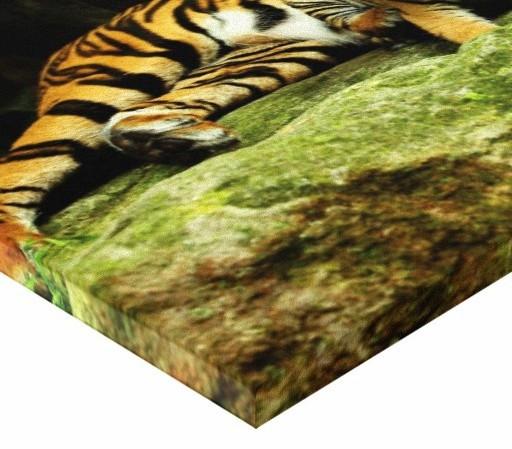 Tablou canvas - Tigru 01
