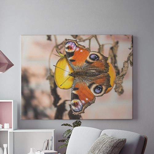 Tablou Canvas Soft wings