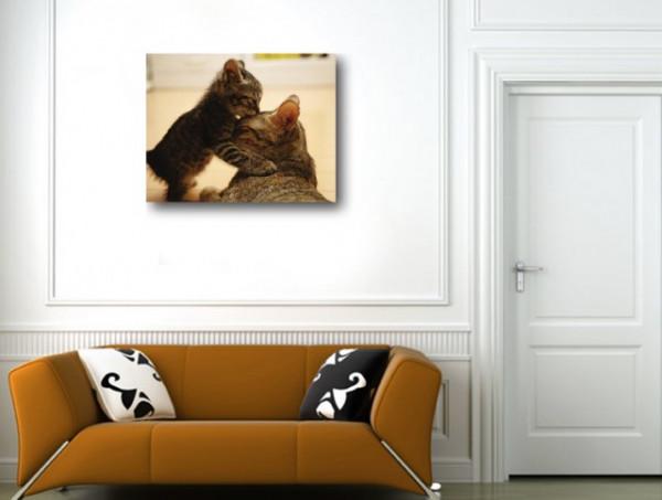 Tablou canvas - Pisici 03