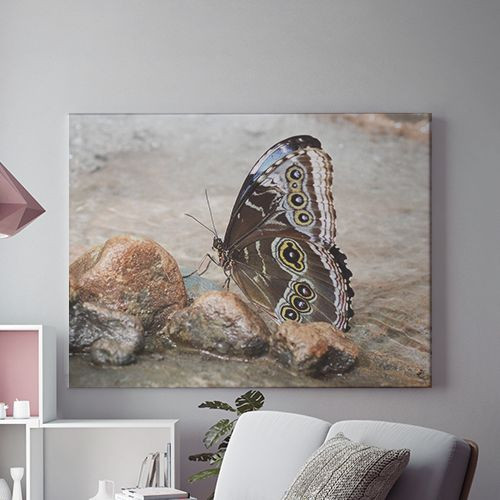 Tablou Canvas On the wings of a butterfly