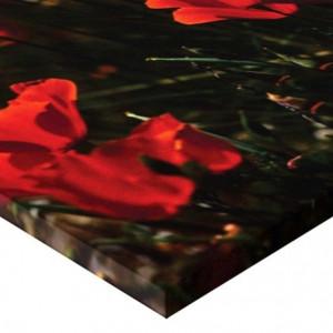 Tablou canvas - maci 01