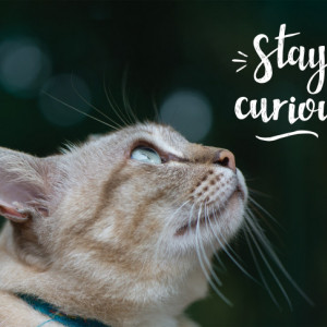 Tablou motivational - Stay curious