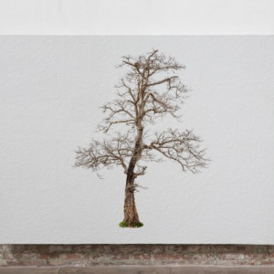 Tablou Canvas Finger Tree Nemesis