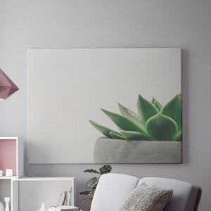 Planta decorativa