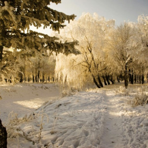 Tablou canvas - peisaj de iarna 01