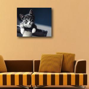 Tablou canvas - Pisici 04
