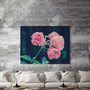 Trandafiri roz