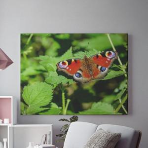Tablou Canvas Fluture pe frunze