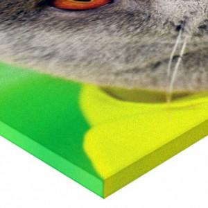 Tablou canvas - Pisici 07