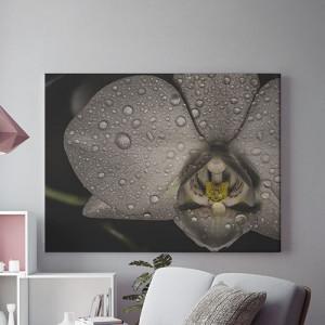 Orhidee neagra