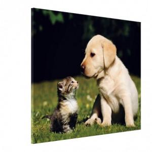 Tablou canvas - cainele si pisica