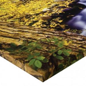 Tablou canvas - padurea 02
