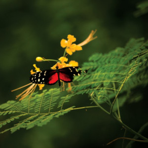 Tablou canvas - fluture