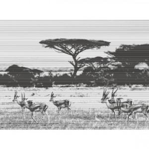 Peisaj Antilope