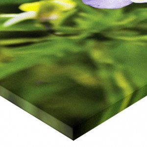 Tablou canvas - gargarita