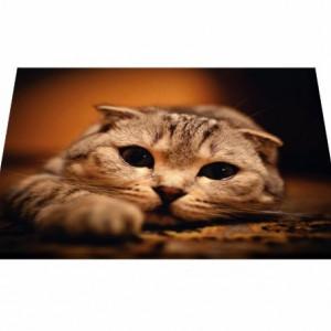 Tablou canvas - Pisici 08