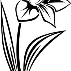 Floare De Colt solo