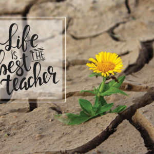 Tablou motivational - Life is the best teacher