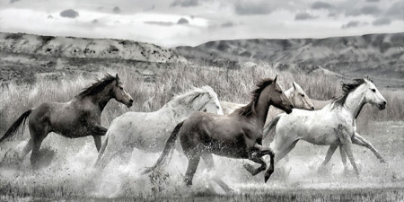 Wild horses run, uramljena slika 50x100cm