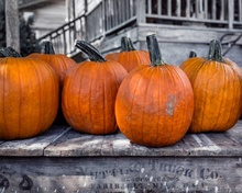 Pumpkins, uramljena slika 45x55 cm