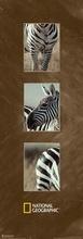 Burchell's zebra, uramljena slika