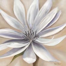 White flower 1, uramljena slika dimenzije 70x70cm