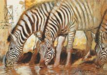 Zebre , uramljkena slika 70x100cm