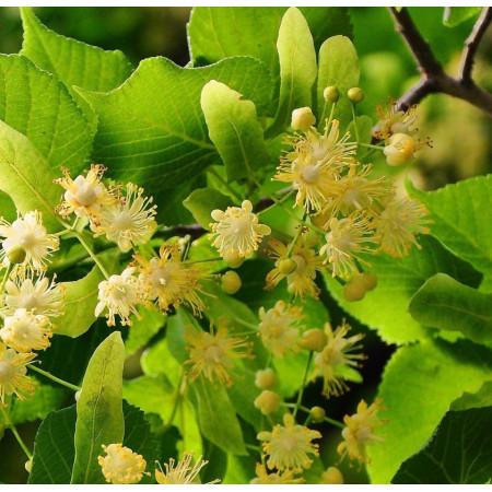 Parfumant cosmetic Flori de tei