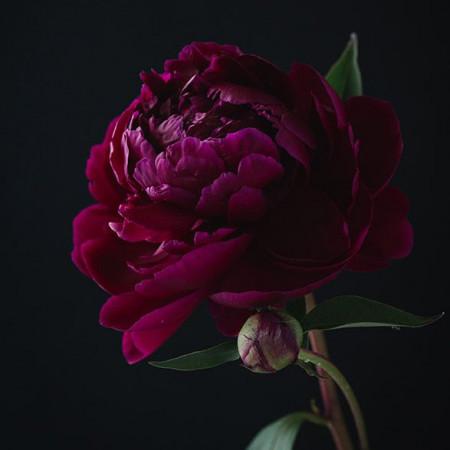 Parfumant cosmetic Bujor Violet (fara alergeni) 10 gr