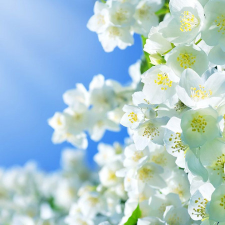 Parfumant cosmetic Jasmin (fara alergeni) 10 ml
