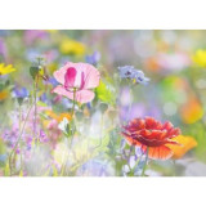 Parfumant cosmetic Fresh Garden 10 ml (Fara alergeni)