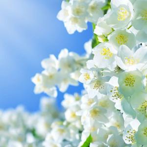 Parfumant cosmetic Jasmin (fara alergeni) 10 gr