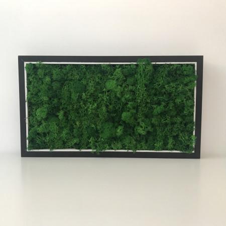 Poze Tablou licheni stabilizati - 42,5 x 24 cm