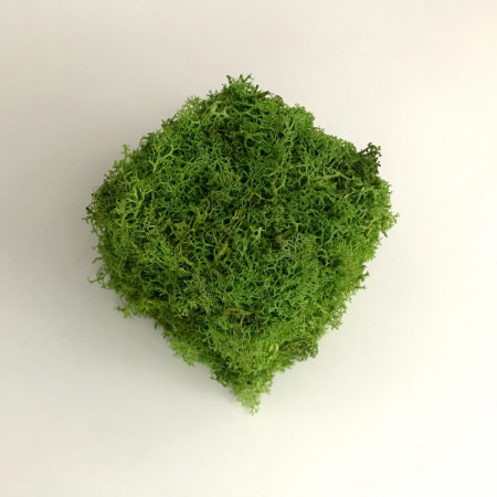 Poze Cub decorativ cu licheni stabilizati
