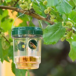 Capcana pentru insecte cu alimentare solara