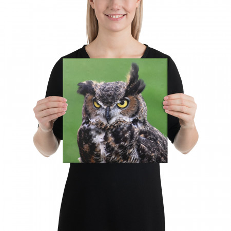 Tablou Canvas Bufnița haioasă - 30x30cm