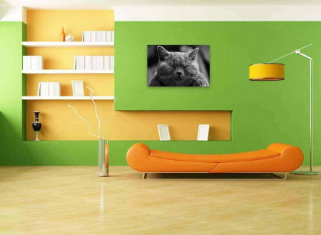 Tablou Sleeping cat, 70x50cm