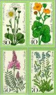 Berlin ber 556#559  1977 Weidebloemen  Postfris