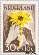 Nederland NL 541  1949 Zonnebloem 30+10 cent  Gestempeld