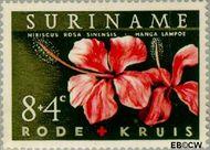 Suriname SU 379  1962 Surinaamse Rode Kruis 8+4 cent  Gestempeld