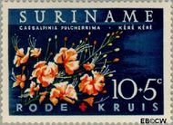 Suriname SU 380  1962 Surinaamse Rode Kruis 10+5 cent  Gestempeld