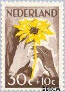 Nederland NL 541  1949 Zonnebloem 30+10 cent  Postfris