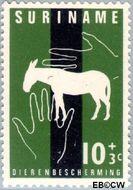 Suriname SU 392  1962 Dierenbescherming 10+3 cent  Gestempeld