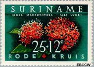 Suriname SU 383  1962 Surinaamse Rode Kruis 25+12 cent  Gestempeld