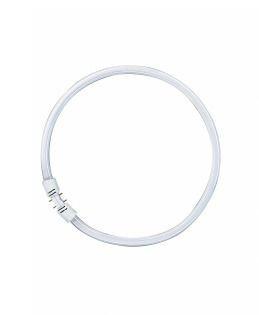 OSRAM LEDVANCE - 4050300528540 - Tradicional FC 40W/830 2GX13