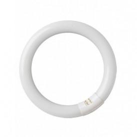 2000589 - 8436021945891 Tubo fluorescente Circular T9 22W G10q 6400K