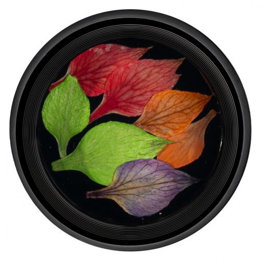 Poze Frunze Uscate Unghii Nature #01 - LUXORISE