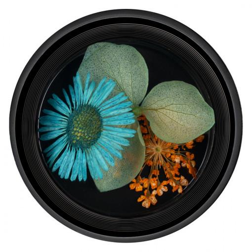 Poze Flori Uscate Unghii Blossom #09 - LUXORISE