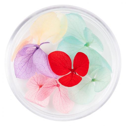 Poze Flori Uscate Unghii Blossom #06 - LUXORISE