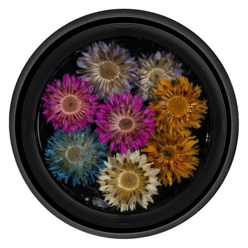 Poze Flori Uscate Unghii Blossom #03 - LUXORISE